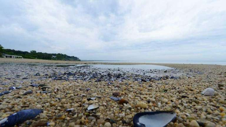 Mussel shells dot Crescent Beach, which is closed