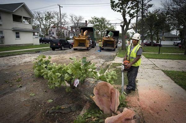 Greenleaf Tree service cuts down trees on East