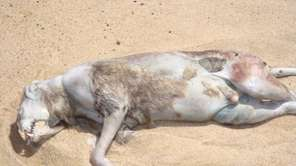"This photo of the ""Montauk Monster"" was taken"