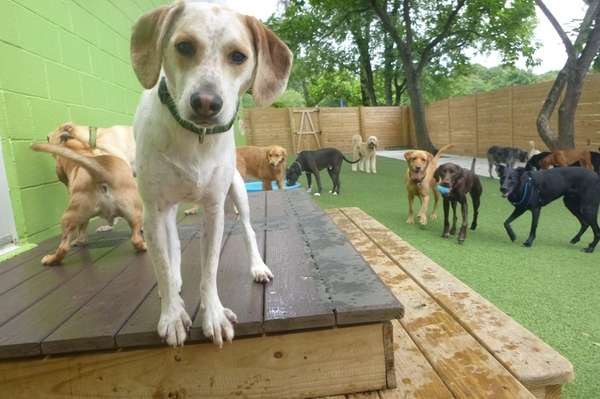 Dogs play at Stay Pet Resort in Baltimore,