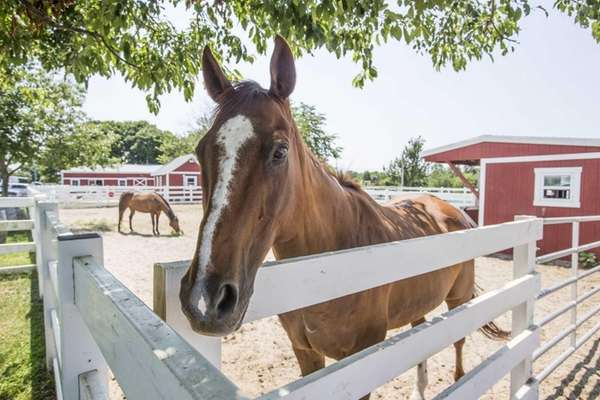 The Baiting Hollow Farm Vineyard and Horse Rescue