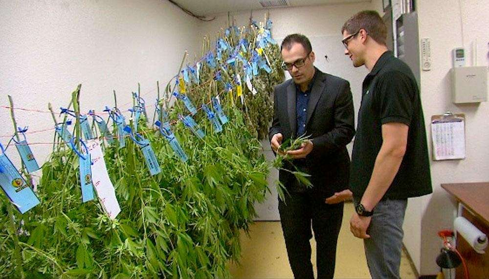 Luke Ramirez, co-owner of the Walking Raven in  Denver, shows some of his product to an employee. His firm grows marijuana in a large warehouse and runs a storefront dispensary for retail customers.</br> Credit: John Prentice / News 12.