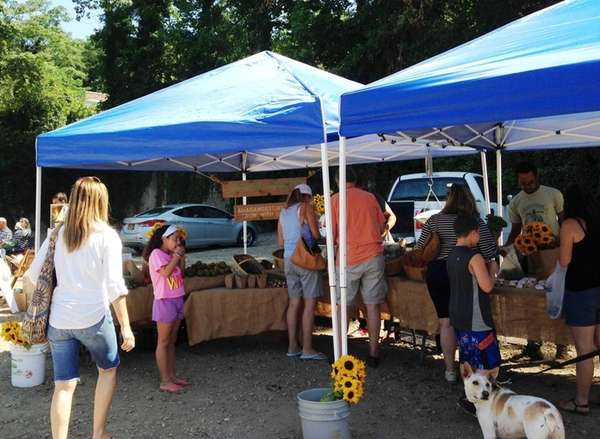 The Roslyn Village Farmers Market launched on Aug.