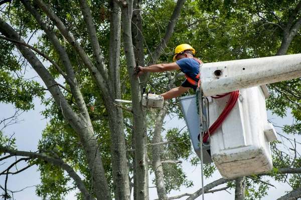 Workers cut down trees along Seamans Neck Road
