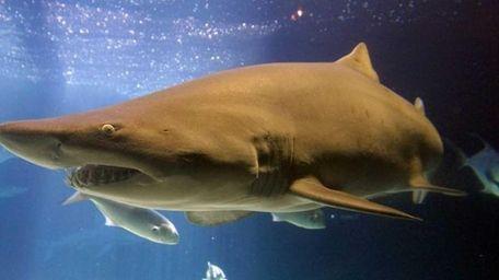 Shark Week 2014 runs until Saturday, Aug. 16,