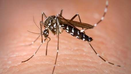 Suffolk County will be spraying for mosquitoes Tuesday,