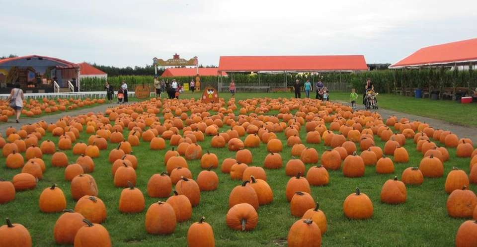 Pumpkins take over White Post Farms (250 Old