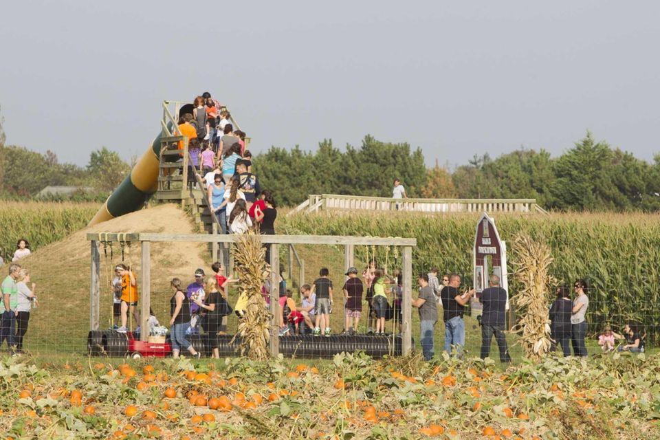 Looking for gigantic pumpkins? Hanks Pumpkintown (240 Montauk