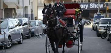 A carriage horse returns to the Clinton Park