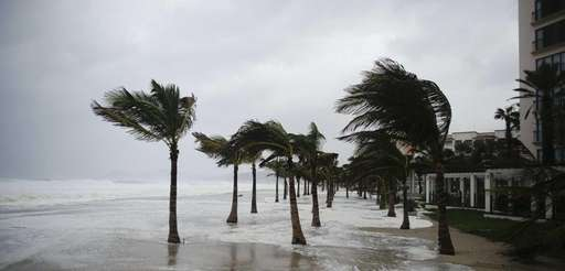 Winds blow palm trees on the beach in
