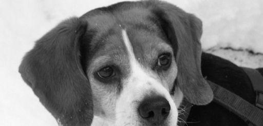 Buddy, Charlie Dvorak's dog, of Northport Village, died