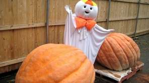 Visit Otto the Ghost at Hicks Nurseries in