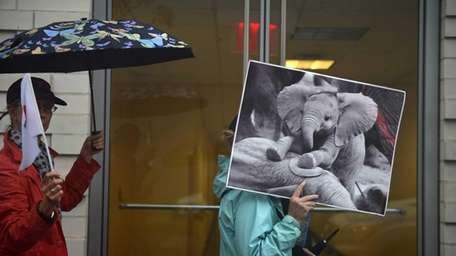 A poster of a baby elephant seen during