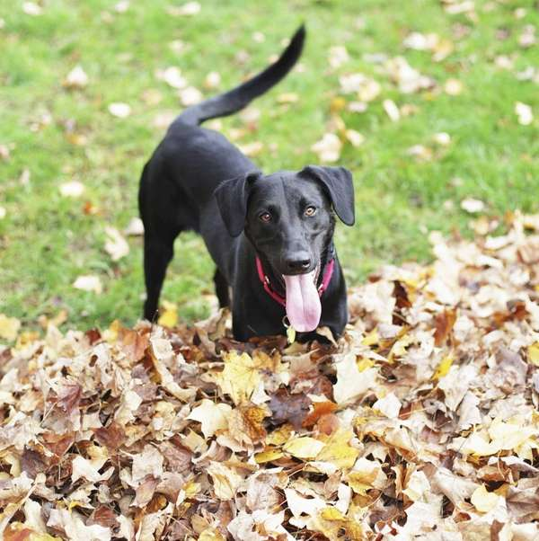 The third annual Fido Fall Harvest Festival in