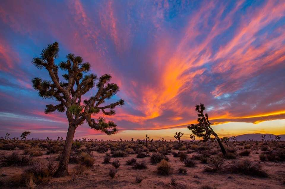 A sunset at Joshua Tree National Park in