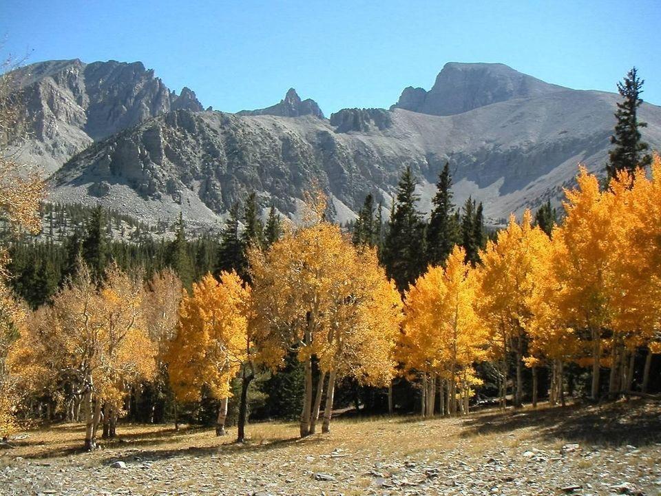 The upper section of the Wheeler Peak Scenic