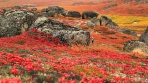 Bering Land Bridge National Preserve in Alaska is
