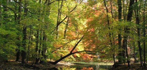 A autumn scene at Old Westbury Gardens.