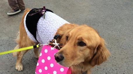 A puppy in costume attends the Potsdam costume