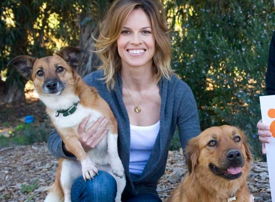 Hilary Swank with her two adopted dogs Karoo,