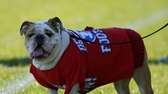 Bellport's team mascot watches from the sidelines in