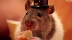 A tiny hamster enjoys a Thanksgiving meal in