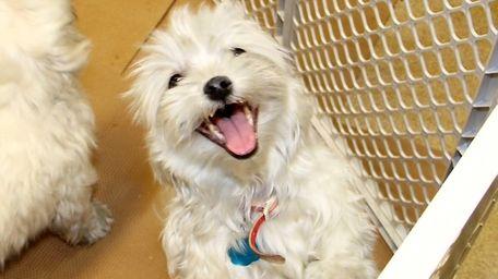 North Shore Animal League America's Rescue Team saved