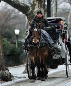 A horse-drawn carriage is ridden in Central Park