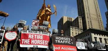 People protest against the use of carriage horses