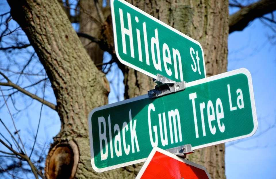 Streets named after trees are some of