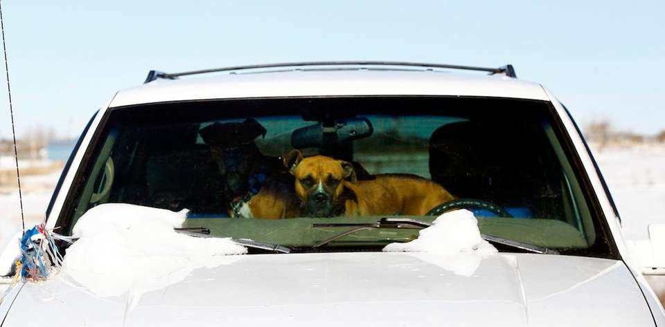Don't leave your pet alone in the car.