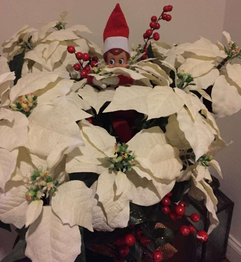 My elf Max hiding in the plant.