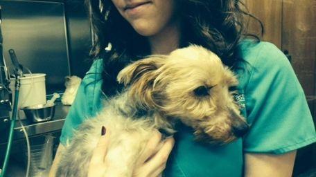 A dog found near death was left in