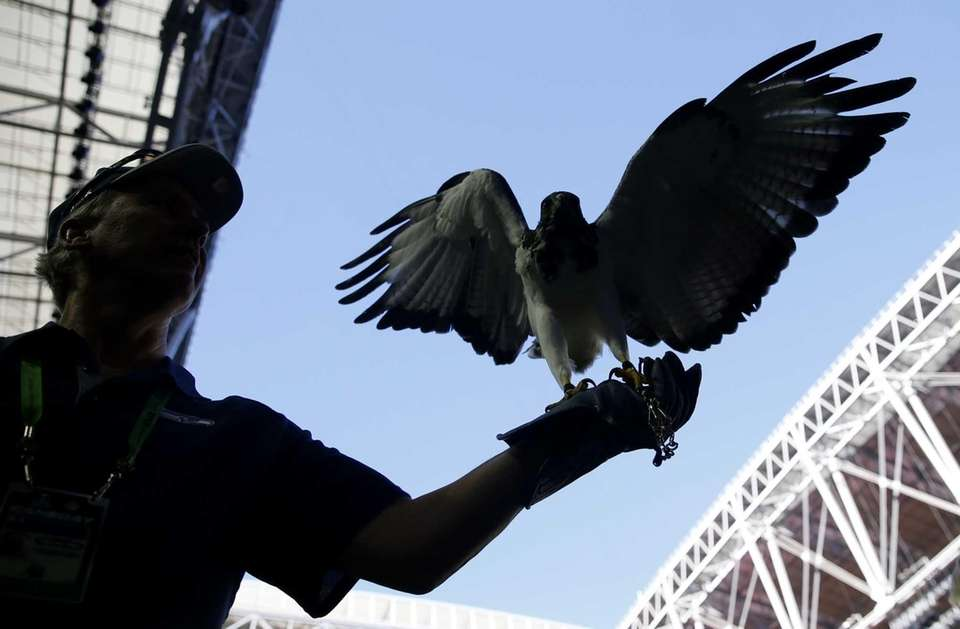 Seattle Seahawk mascot Taima the Hawk is held