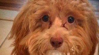 Working on my puppy eyes ?ü��?ü��#ideserveatreatforthis #yesiatethesnow #puppyeyes
