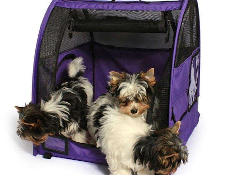 Travel safely with your dog or cat with