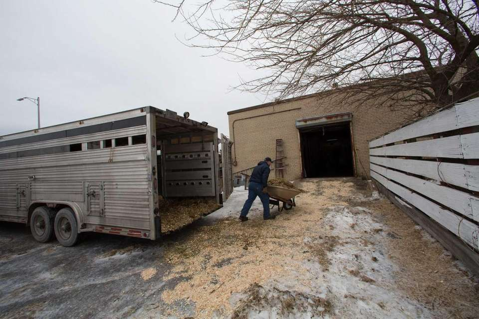 A livestock trailer is parked outside the Vetport