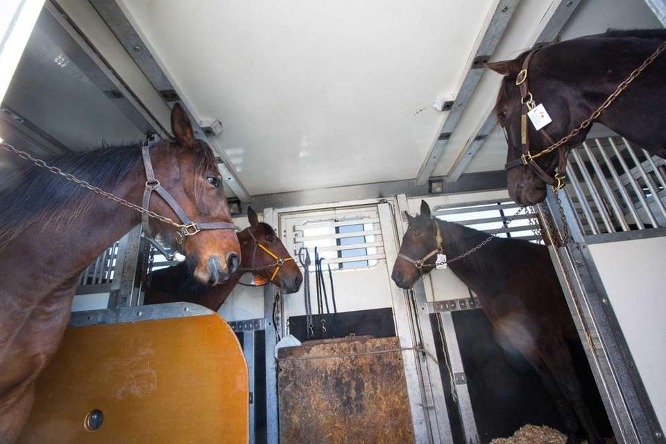 Horses in a tractor trailer that was led